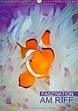 Faszination am Riff (Wandkalender 2014 DIN A3 hoch): Bunte Unterwasserwelt (Monatskalender, 14 Seiten)