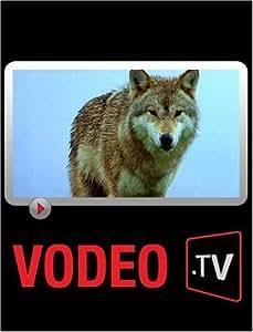 Frère Loup : Récit entre légende et réalité au Parc des loups du Gévaudan