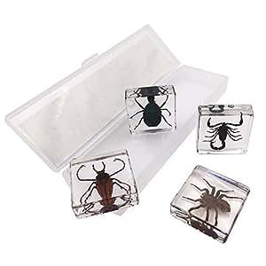 WhizKidsLab 4PCS Real Bugs Insect Arachnid Resin Specimen STEM set + Magnifier + Fun Fact Sheet Poster