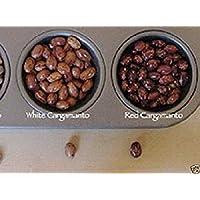 Virtue White Cargamanto Bean Aka Frijol Cargamanto Blanco -50 Seed, Columbian Heirloom