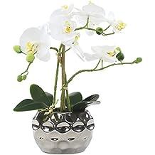 Suchergebnis Auf Amazon De Fur Orchideen Ubertopfe Silber Decoline