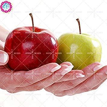 11.11 grande promotion! 30 pcs / lot graines arbre géant fruit jus rouge jardin vert graine et maison plante herbacée vivace organique aweet