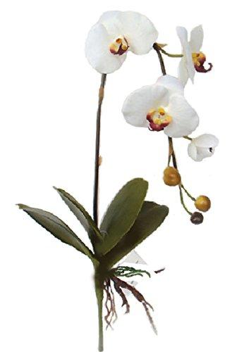 Namiba Terra 5890 Spitzblattbromelie, 7 Blätter, PU, 51 cm, grasgrün Sieben Blätter