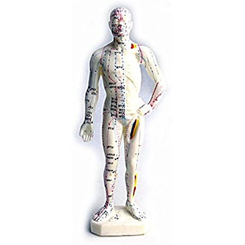 SaySure - 26cm Acupuncture Model Body by SaySure