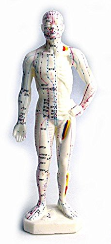 SaySure - 26cm Acupuncture Model (Fisher Body Shield)