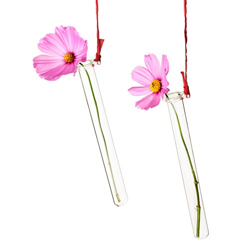 Glas-boden-vasen (5x Reagenzglashalter für Blumen mit Reagenzglas ☆ Blumenvase ☆ Vase Hochzeit ☆ Hochzeitsdeko)