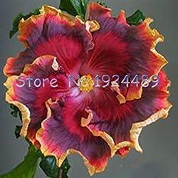 Seltene 24 verschiedene Farben der japanischen Bonsai Hibiskussamen 50PCS Gartenpatio Topfblumen