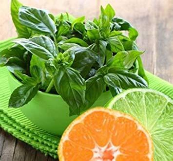 Homely 150 Lime Basil Graines Légumes Pour La Cuisine Maison Jardin