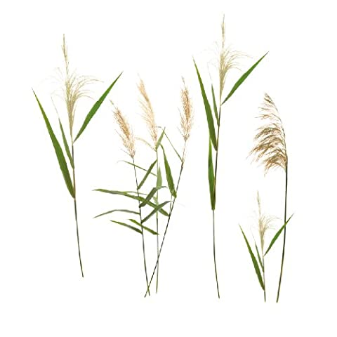 Eurographics DS-DT7044 Wall Sticker Wall Grasses 50 x 70 cm