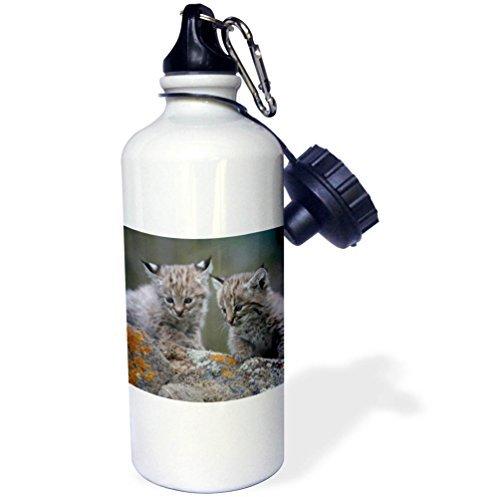 Baby Tiere Bobcat Kätzchen Lynx Rufus Montana USA Sport Wasser Flasche Edelstahl-Flasche für Frauen Herren Kinder 400ml - Bobcat Lynx