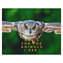 ABC's for the Animals I See (Nature Book 1) (English Edition)