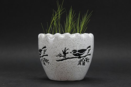PORT REGALO Ceramic Cracked Egg Shell Planter (WHITE) (Without Plant) (With Organic Soil)