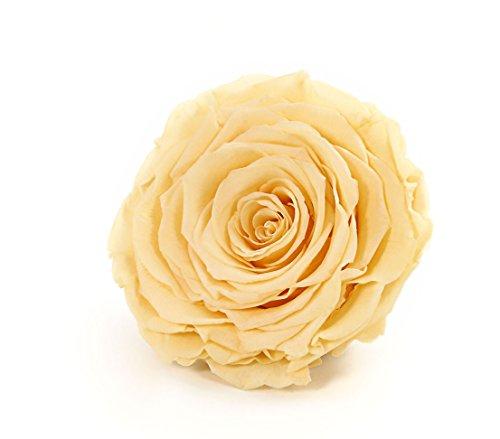 Rosenbox Handverlesene, echte Rosen von höchster Qualität