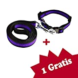 Tamia Living 2er verstellbares Hundehalsband + Hundeleine Set Halsband Leine Nylon mit Klickverschluss (G1008 violett)