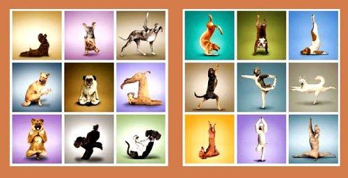 2 er Set Wandbilder Hunde Motive Yoga Gymnastik Spass Bild je 50 cm x 50 cm
