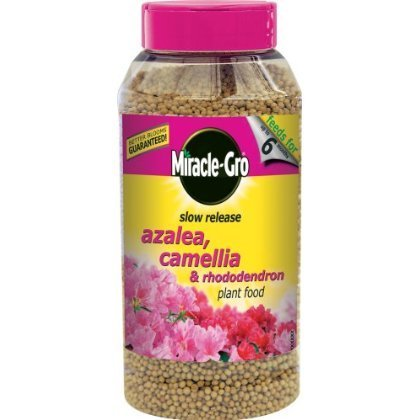 2-x-miracle-gro-1-kg-slow-release-azalea-camellia-and-rhododendron-plant-food-shaker-jar