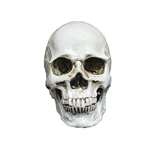 Zubita Entfernbarer Menschlicher Schädel, Geschnitzte Schädel Kopf Modell Deko, Totenkopf Halloween/Room Escape Requisiten/Spukhaus Dekoration, Circa 7.0 * 9.0cm (Lebensgroße Halloween Requisiten)