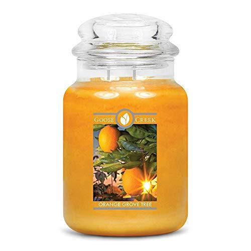 Orange Grove Tree 680g (Orange Grove)