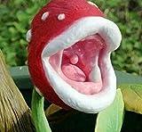 Insektenfang Pflanze Zauberin Fleisch fressende Anlage Schreibtisch Pot Bonsai Samen Slurperon Samen, 150pcs / bag