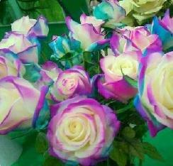 Rose Seed 17 varietà rare colorato rose non si può perdere il balcone in vaso Rose serie di semi di fiori 50 pezzi