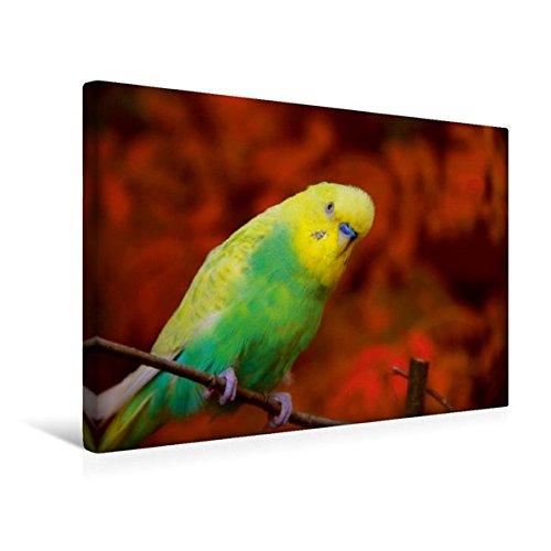 Trinken Vogel Spielzeug (Premium Textil-Leinwand 45 cm x 30 cm quer, Herbstimpressionen eines Wellensittichs | Wandbild, Bild auf Keilrahmen, Fertigbild auf echter Leinwand, ... Familienkalender