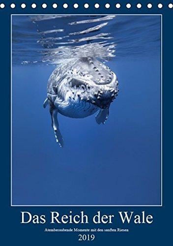 Im Reich der Wale (Tischkalender 2019 DIN A5 hoch): Atemberaubende Momente mit den sanften Riesen (Monatskalender, 14 Seiten ) (CALVENDO Tiere)