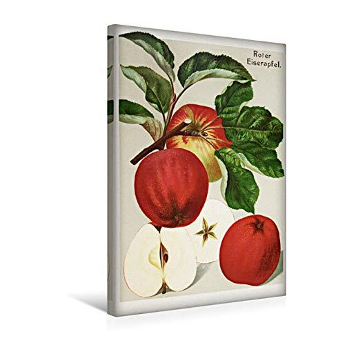 Premium Textil-Leinwand 30 cm x 45 cm hoch Roter Eiserapfel, plattdeutsch: Iserappel, Mahrenholzer