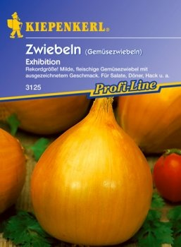 Zwiebel 'Exhibition' (Allium cepa)