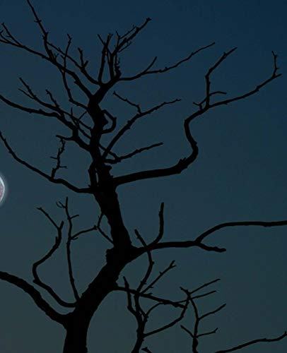 ook Creepy Moonlight Tree Silhouette Halloween 130 Pages: (Notebook, Diary, Blank Book) (Seasonal Fall Photo School Composition Books Notebooks) ()