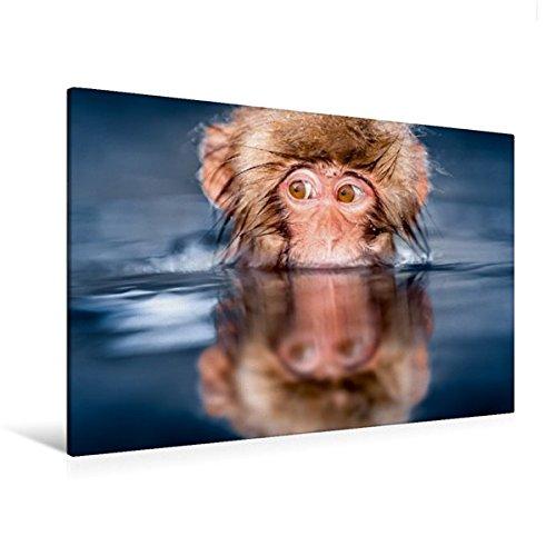 Premium Textil-Leinwand 120 cm x 80 cm quer, Affenbaby auf Tauchstation | Wandbild, Bild auf Keilrahmen, Fertigbild auf echter Leinwand, Leinwanddruck (CALVENDO Tiere)