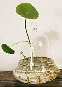 klare glocke glas wandbehang vase flasche blumenvase dekorvase tischvase fuer. Black Bedroom Furniture Sets. Home Design Ideas