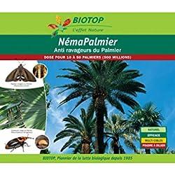 Nematodos palmera contra el corzón rojo y la mariposa palmiva - 500 millones