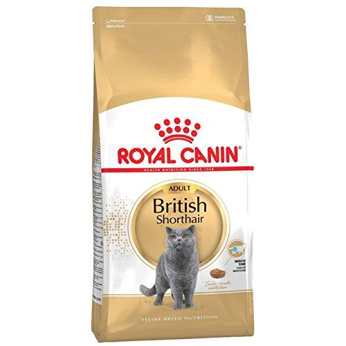 Royal Canin Katzenfutter, Britisch Kurzhaar, 10 kg, - British Kurzhaar Katzenfutter