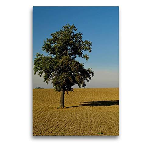 Calvendo Premium Textil-Leinwand 50 cm x 75 cm hoch, EIN Motiv aus dem Kalender Fest verwurzelt - Faszinierende Bäume im Wandel der Jahreszeit   Wandbild, Bild Leinwand, Leinwanddruck Natur Natur