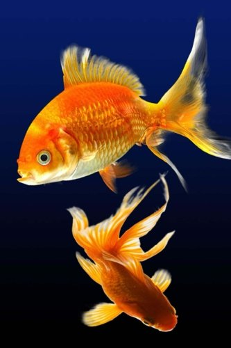 Goldfish: 150 Lined Journal Pages / Diary / Notebook Featuring Two Goldfish Swimming Together on the Cover (Cover Goldfish)