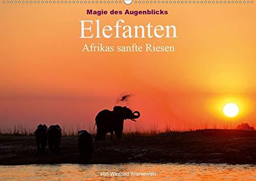 Magie des Augenblicks - Elefanten - Afrikas sanfte Riesen (Wandkalender 2020 DIN...