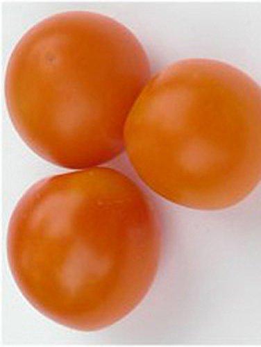 Frühe, orange Buschtomate 'Ida Gold' (Solanum lycopersicum) 10 Samen - Orange Cherry-tomaten
