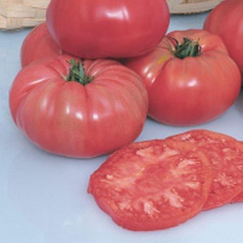 """Ungarische Samen Tomate""""Prudens Purple"""", extra grosse Brandwein Tomate, von unserer ungarischen Farm samenfest, nur organische Dünger, KEINE Pesztizide"""