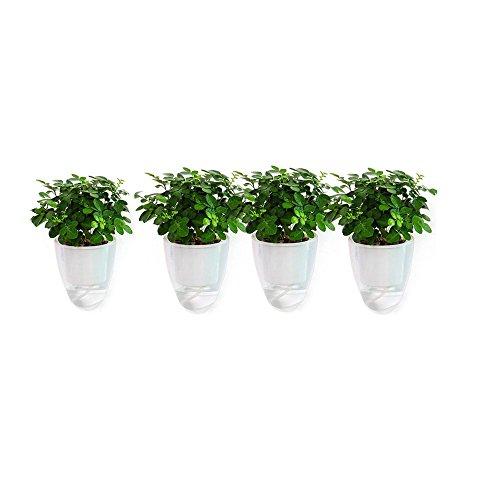 5pack sichtbar Wasser Level Lazy Blumentöpfe Saugnapf Wasser Pflanzen Topf, Sukkulenten und kleine Blumentöpfe Pflanzen Töpfe Innen Out Blumentopf Fenster Boxen farblos