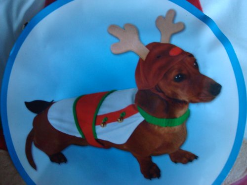 festive-fun-pet-dress-up