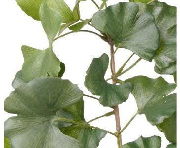 Sweet Gingko Zweig, 48 Blätter, Länge 72cm – Kunsblumen künstliche Blumen Kunstpflanzen künstliche Pflanzen Blumen