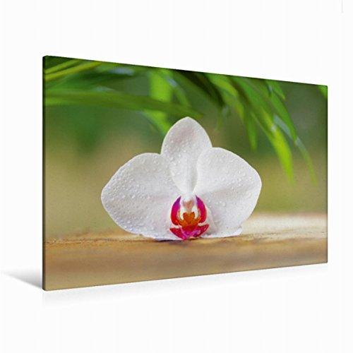 Calvendo Premium Textil-Leinwand 120 cm x 80 cm quer Orchideenblüte | Wandbild, Bild auf Keilrahmen, Fertigbild auf echter Leinwand, Leinwanddruck Gesundheit Gesundheit
