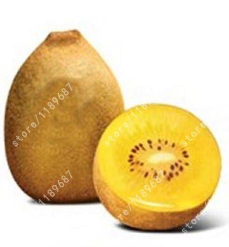 AGROBITS kiwi NO-GMO puede comer plantas árbol frutal