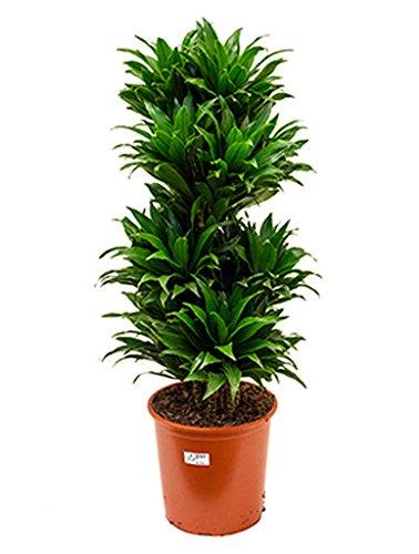 Zimmerpflanze Wenig Licht Test - Gartenbau für Jederman - ganz ...