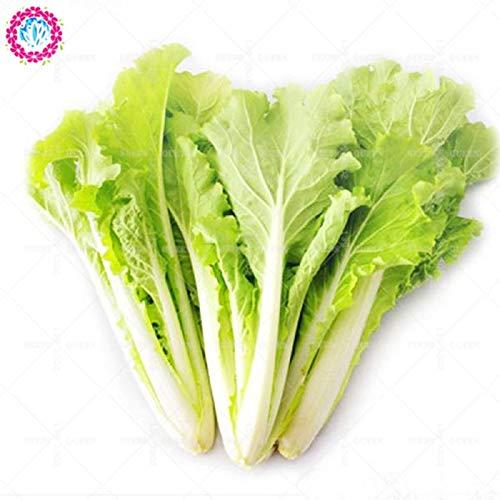 Shopmeeko 100 PCS héritage vert Malabar épinards plante organique légume plante salade feuilles bon goût non-OGM maison jardin plante