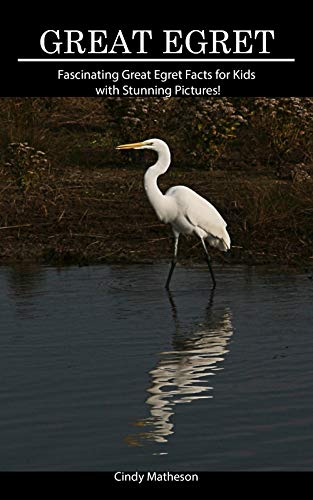 Descarga gratuita Great Egret: Fascinating Great Egret Facts for Kids with Stunning Pictures! PDF