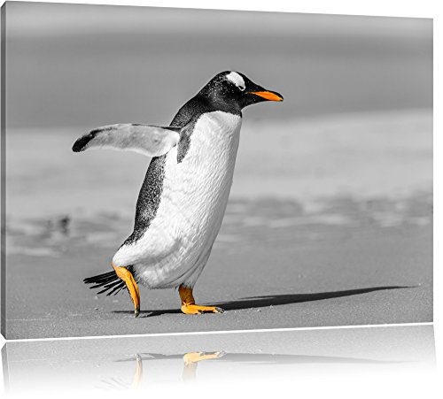dandinant pingouin sur la plage noir / blanc Taille: 100x70 sur toile, XXL énormes Photos complètement encadrées avec civière, impression d'art sur murale avec cadre, moins cher que la peinture ou la peinture à l'huile, pas une affiche ou une bannière,