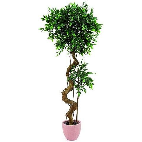 Ficus Árbol con Bonsai tronco 170cm, Planta Artificial