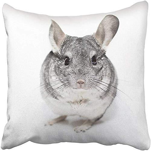 Klotr Pillowcases Sofa Decorative Throw Pillow Case Cushion Cover Gray Adult Black White Chinchilla Silver Amusing Angry Animal Closeup Cute 18x18 Inch Cases Pillowcases Covers Sofa Two Sides Print Black Chinchilla