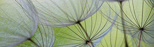 """Infrarotheizung Glas mit Bild und silbernem Rahmen, 500 Watt - lang, Motiv \""""Pusteblumen\"""""""